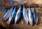 Is Canned Tuna Good For Bodybuilding?